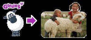 real sheep